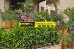 Villas for Rent Palm Springs Gurgaon033