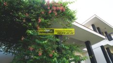 Tatvam Villas Gurgaon 09